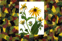 Black-eyed Susans Collage