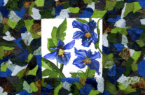 Blue Poppies Collage